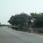 Herds of goat on the Hiriyur Bellary road